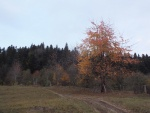 Autumn in the forest 2