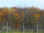 Colorfull trees